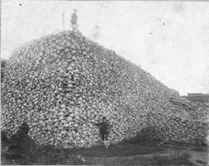 "Indigent to the prairie and a primary food source for Indian tribes, the buffalo was slaughtered to near-extinction by the white man in the 1860s. This photograph, which captures only a fraction of the bones from the estimated millions of buffalo shot for their hides and often left to rot, can be found in Michael Blake's ""Indian Yell: The Heart of an American Insurgency."""