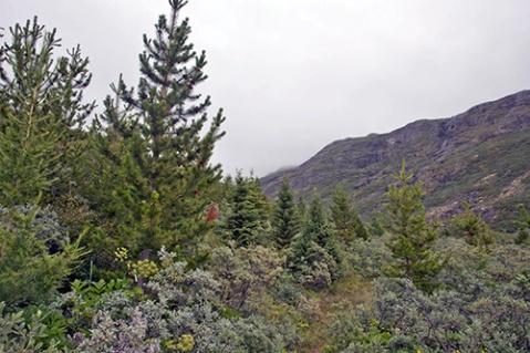 greenlandforest2