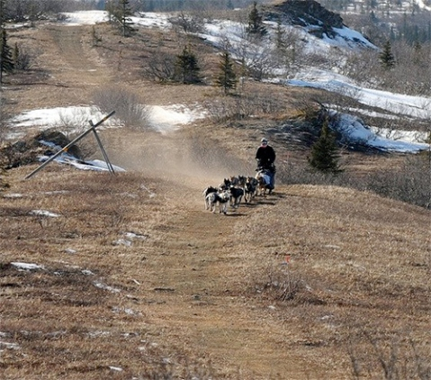 Iditarod Dogsled race, Alaska, 2014. Because mushers were outraged at conditions last year, organizers have moved the course northward in 2015.