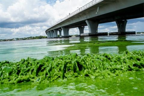 floridaalgae