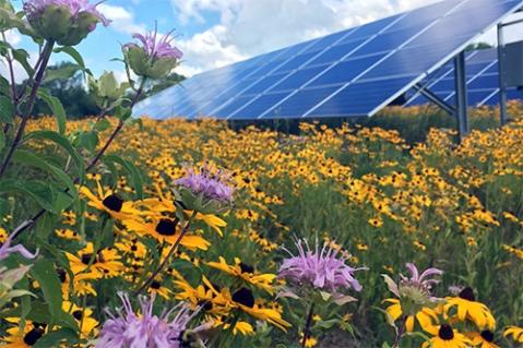 solarpollinators