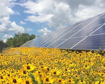 solarpollinator2