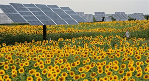 MJS Solarfarm, nws, sears, 5